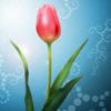 Что подарить на 14 февраля и 8 марта?