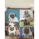 SALE! Poster Pugs