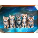 РАСПРОДАЖА! Постер Коты по оптовой цене