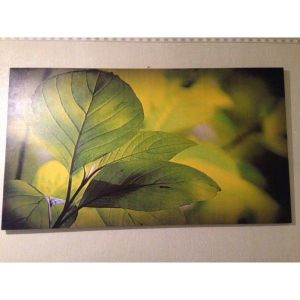 SALE! Canvas on stretcher Green leaf